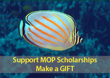 Support MOP Scholarships