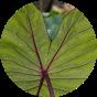 Kūaliʻi Council Website