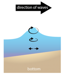 <p>Fig. 4.&nbsp;As deep-water waves approach shore and become shallow-water waves, circular motion is distorted as interaction with the bottom occurs.</p>