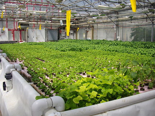 <p>Fig. 5. Hydroponic systems make it possible for larde scale production of food with less wasted space and water.</p>