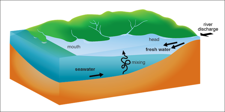 Fig 224 In This Diagram Of An Estuary The Mouth Of The Estuary Is