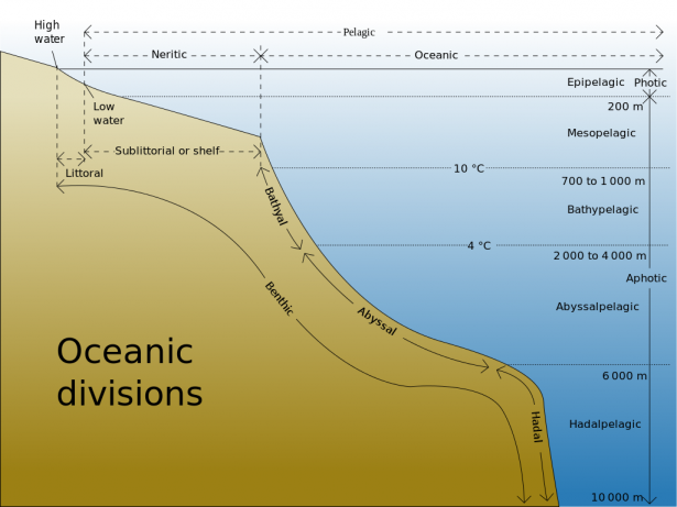 <p>Fig 3. Diagram of the divisions of the ocean.</p><br />