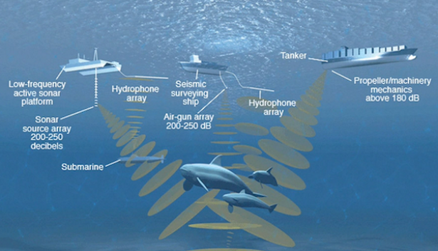 <p>Fig. 8. Human produced, or anthropogenic, noise pollution can be harmful to a nearby whale and interrupt it's own ability to communicate.</p><br />