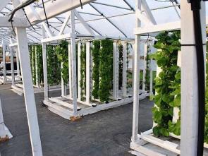 <p>Fig. 6. Vertical hydroponic systems allow for more growth opportunity in smaller spaces.&nbsp;</p><br />