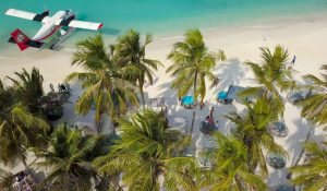 Beach With Palm Trees And Airplane At Shore