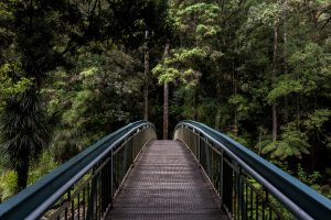 Bridge In The Middle Of Forest