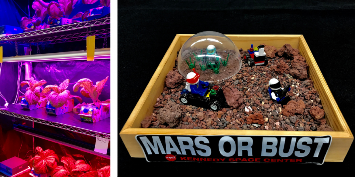 Plants growing under purple lighting and Mars or Bust diorama