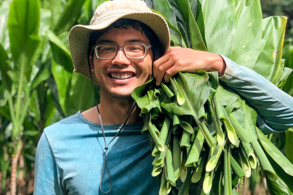 Ryan Ringuette harvesting ti leaves